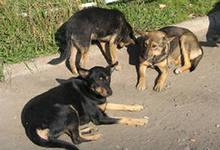 стартап: база данных бездомных собак, подбор собаки по данным будущего владельца