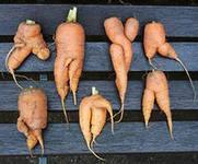 бизнес на продаже некрасивых и смешных овощей и фруктов