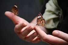 разведение бабочек, красивый и прибыльный бизнес