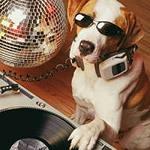 дог - клуб для домашних собак