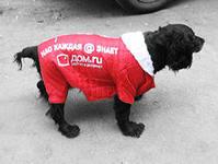 медиа-носитель нового формата, реклама на собаках