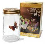 домашний бизнес: выращивание и продажа бабочек