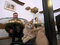 плюшки + кошки в итоге кошкокафе, монетизируем любовь к домашним животным