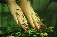 пилинг кожи с помощью рыбок гарраруфа
