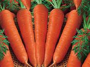 десять вариантов заработка на обычной моркови