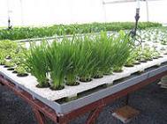 бизнес идея: выращивание зелени круглый год