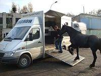 фирма занимающаяся грузоперевозками сельскохозяйственных животных
