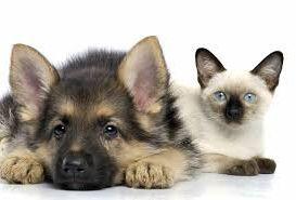 шесть идей домашнего бизнеса для любителей животных