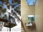 отель-гнездо на дереве